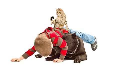 Foto de El muchacho, perro y Gato divertido jugando juntos aislado sobre fondo blanco - Imagen libre de derechos