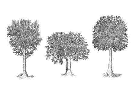 Photo pour Illustration des arbres - image libre de droit