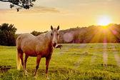 Beautiful  horse on the pasture at sunset in south carolina moun