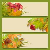Vector autumn banners with rowan berry and maple fall leaves flowers grass