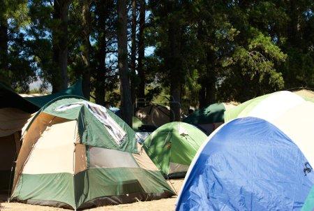 Photo pour Camping avec de nombreuses tentes dans la forêt naturelle - image libre de droit