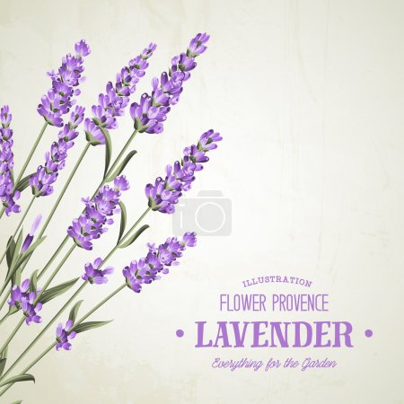 Illustration for The lavender elegant card. Bouquet of lavender flowers in watercolor paint style. The lavender elegant card with frame of flowers and text. Lavender garland for your text presentation - Royalty Free Image
