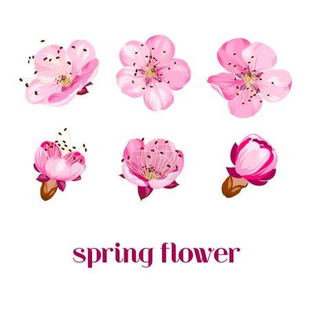 Illustration for Sakura flowers isolated over white. Spring background. Vector illustration - Royalty Free Image