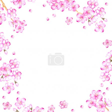 Frame of cherry blossom flowers.