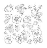 Collection of strawberries isolated on white background Strawberries blossom bundle Flowers contours collection Vector illustration