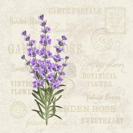 Illustration for The lavender elegant card. Vintage postcard background vector template for wedding invitation. Label with lavender flowers. Vector illustration - Royalty Free Image