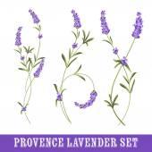Set of lavender