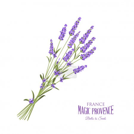Illustration for The lavender elegant card with bouquet of flowers and text. Lavender garland for your text presentation. Label of soap package. Label with lavender flowers. Vector illustration - Royalty Free Image