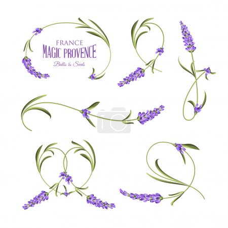 Illustration for Set of lavender flowers elements. Botanical illustration. Collection of lavender flowers on a white background. Lavender hand drawn. Watercolor lavender set.  Lavender flowers isolated on white - Royalty Free Image