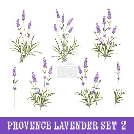 Illustration for Vintage set of lavender flowers elements. Botanical illustration. Collection of lavender flowers on a white background. Lavender hand drawn. Watercolor lavender set - Royalty Free Image
