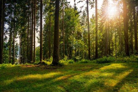 Waldlichtung im Schatten der Bäume im Sonnenlicht
