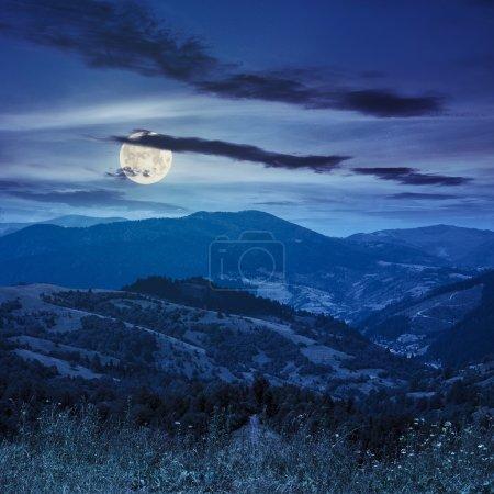 Photo pour Herbe sauvage haute au sommet de la chaîne de montagnes la nuit en pleine lune - image libre de droit