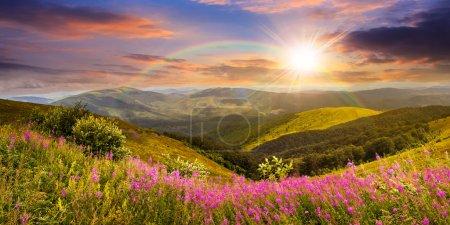 Wildblumen auf dem Berggipfel bei Sonnenuntergang