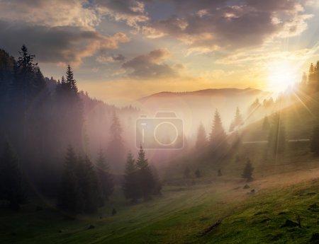 Photo pour Rayons du soleil du soir brisant les nuages et le brouillard à la prairie de forêts de conifères dans les montagnes - image libre de droit