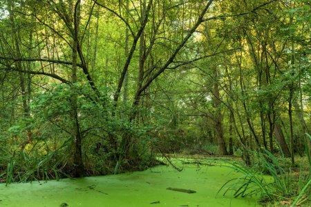 Grünes Sumpfland im Mussonville-Park bei Bordeaux, Frankreich
