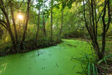 Grünes Sumpfland mit hellem Herbstsonnenuntergang im Mussonville Park in der Nähe von Bordeaux, Frankreich