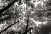 Misty jungle background