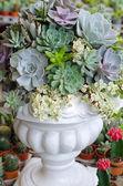 Miniaturní sukulentní rostliny zdobené v bílé pot