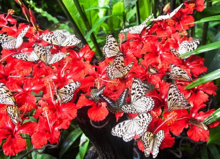 beautiful Butterfly with red flowers