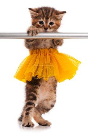 niedliches kleines Kätzchen