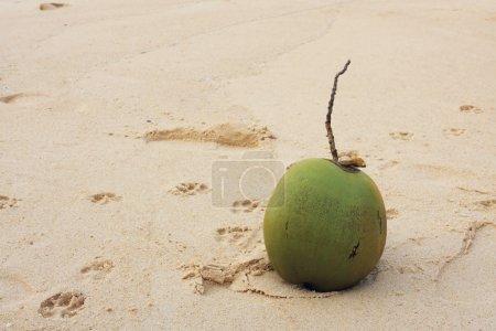 Photo pour Noix de coco sur la plage de sable - Inde, - image libre de droit