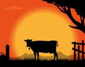 Kráva na venkově v západu slunce