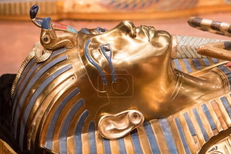 King tut head shot laying down...