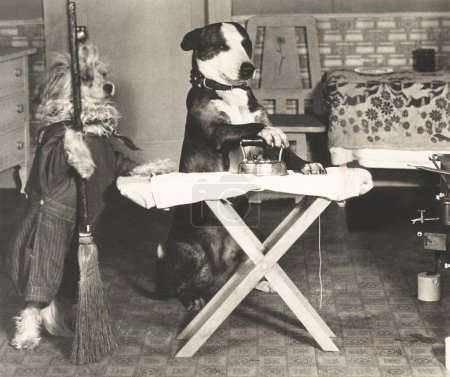 Cute dogs doing housework