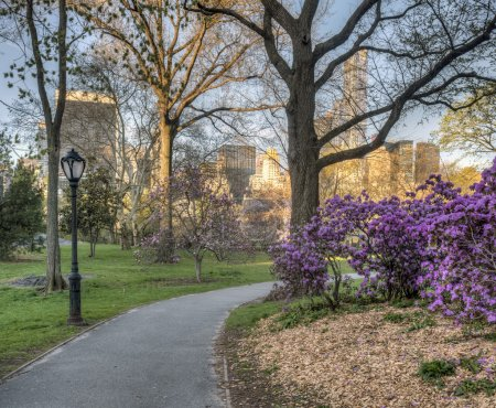 Photo for Spring in Central Park, New York City - Royalty Free Image