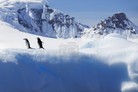 Penguins on glaciers and icebergs in Antarctica