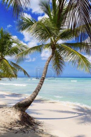 Beach on tropical island