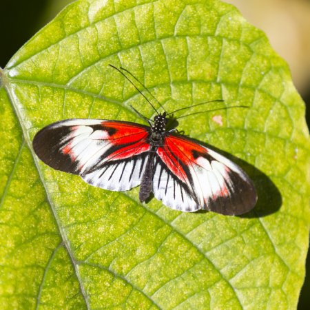 Photo for Close up Colorful Butterfly and green leaf - Royalty Free Image