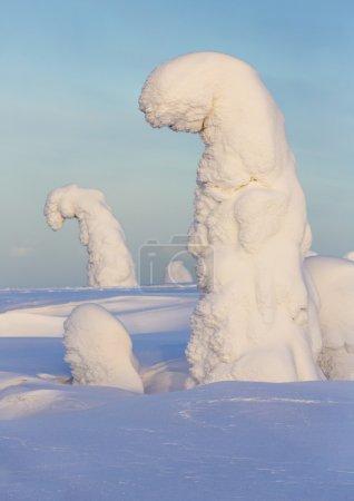 Photo pour Autour de fortes chutes de neige et les arbres qui sont coincés par la neige. Phénomène du réchauffement climatique. - image libre de droit