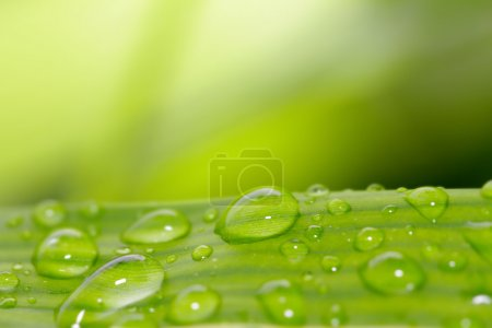 close up of green leaf with water drops