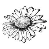 Beautiful monochrome black and white daisy flower isolated for greeting cards and invitations of wedding birthday mother's day and other seasonal holiday