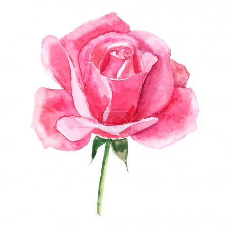 Illustration for Beautiful rose watercolor hand-painted isolated on white background. for greeting cards and invitations of the wedding, birthday, Valentine's Day, mother's day and other seasonal holidays - Royalty Free Image