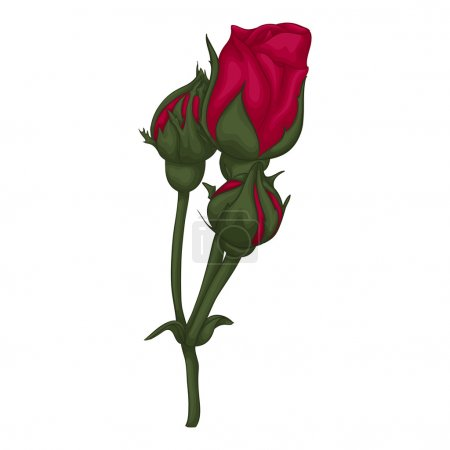 Illustration for Beautiful red rose isolated on white background. for greeting cards and invitations of the wedding, birthday, Valentine's Day, mother's day and other seasonal holidays - Royalty Free Image