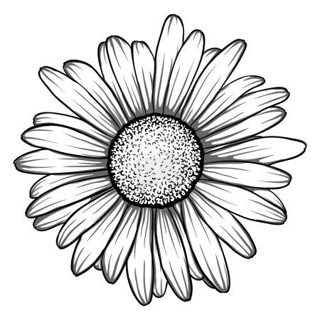 Beautiful monochrome, black and white daisy flower...