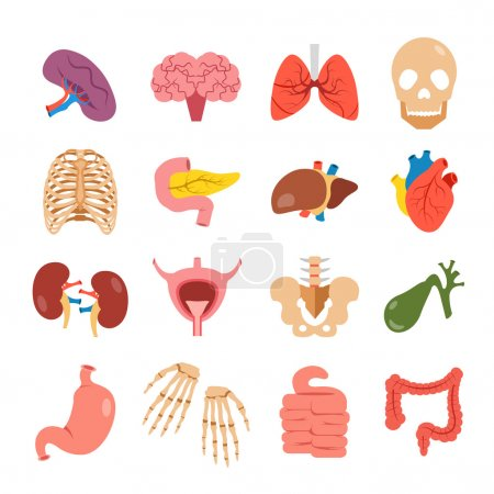 Human organs set. Modern concepts. Bones and internal organs vector icons. Colorful flat design illustration