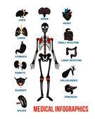 Vector set of human anatomy infographics icons