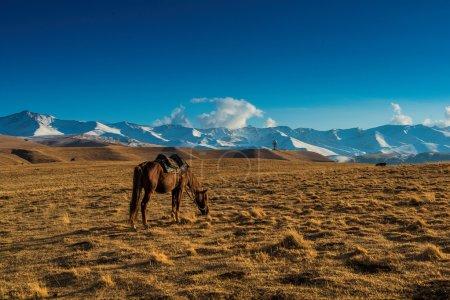 Steppe Kazakhstan, plateau Assy