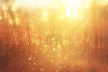 Photo pour Image de fond de lumière éclate entre les arbres. l'image est de style rétro instagram filtrée. - image libre de droit