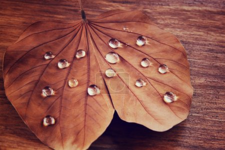 Low key image of Dry leaf with dewdrops on wooden background. selective focus. filtered image