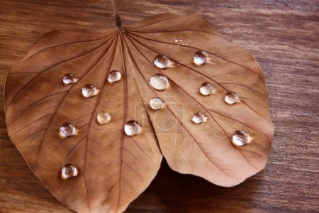 Low key image of Dry leaf with dewdrops on wooden background. selective focus.