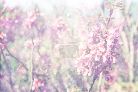 Double exposure of Spring Cherry blossoms tree. abstract background. dreamy concept