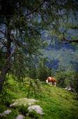 Alpine Schönheit