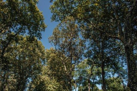 Photo pour Vue à angle bas des arbres et de la lanterne avec ciel bleu en arrière-plan - image libre de droit