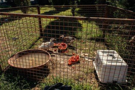 Canards broutant près de la pastèque en haie sur l'herbe