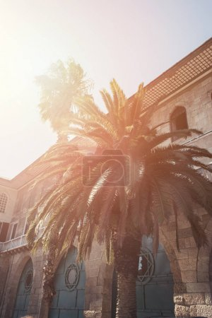 Palm trees near old building in Istanbul, Turkey