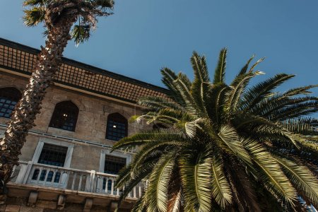 Low angle view of palm trees near facade of old building in Istanbul, Turkey